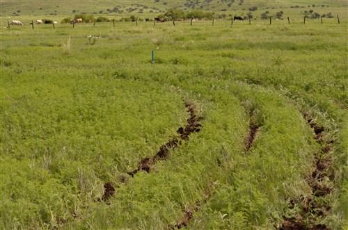 Carbon en bosques y suelos curvas a desnivel diseño hidrologico